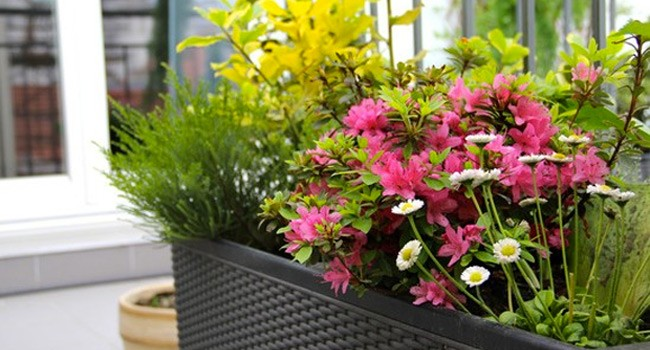 D co nature ou comment am nager son balcon pour l t for Plantes jardiniere plein soleil